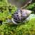 "@Map { ""username"": ""Kahuli"", ""uuid"": ""128522"", ""routing"": Map { ""slug"": ""kahuli"" }, ""links"": Map { ""photos"": ""https://api.beanhunter.com/users/128522/photos"", ""favourites"": ""https://api.beanhunter.com/users/128522/favourites"", ""self"": ""https://api.beanhunter.com/users/128522"", ""following"": ""https://api.beanhunter.com/users/128522/following"", ""follow"": ""https://api.beanhunter.com/users/128522/follow"", ""web"": ""https://www.beanhunter.com/users/kahuli"", ""followers"": ""https://api.beanhunter.com/users/128522/followers"", ""reviews"": ""https://api.beanhunter.com/users/128522/reviews"", ""drinks"": ""https://api.beanhunter.com/users/128522/drinks"" }, ""stats"": Map { ""reviews"": 1, ""photos"": 0, ""drinks"": 0, ""following"": 0, ""followers"": 0, ""joined"": ""2019-12-25T00:12:21+00:00"" }, ""address"": Map { ""city"": ""Newcastle NSW"", ""country"": ""Australia"" }, ""avatar"": Map { ""data"": Map { ""uri"": ""https://cdn.beanhunter.com/img/21edd49de5ef96e7e9ddf431e35e8050.png"" } } }"